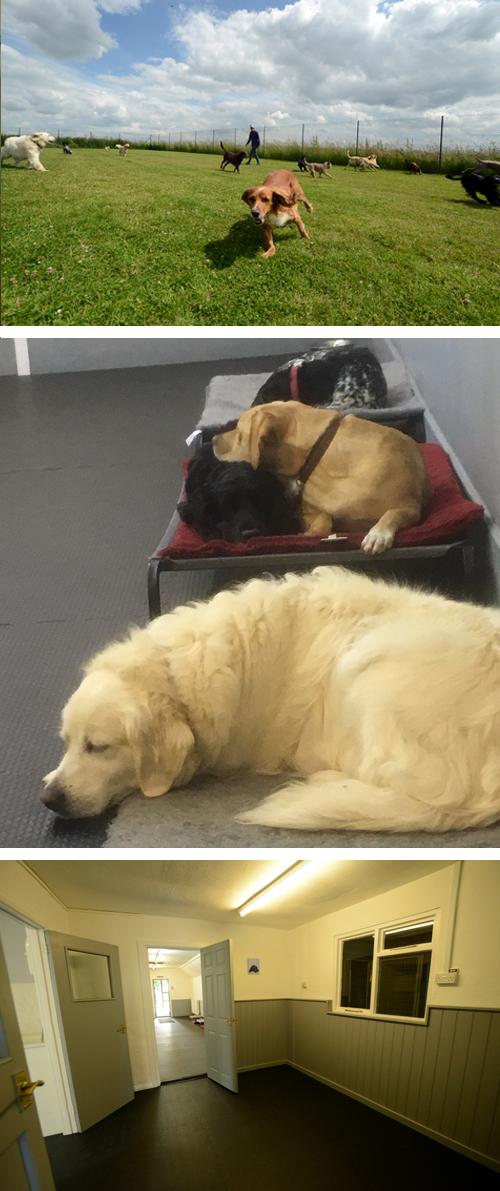 Dog daycare suffolk
